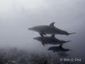 Groep dolfijnen tijdens de vroege ochtend duik