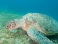 schildpad-dichtbij