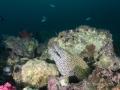 Oman - Fahal Islands