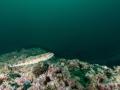 Oman - Cockle Shell Bay
