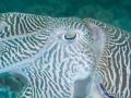 Oman - Seahorse Bay